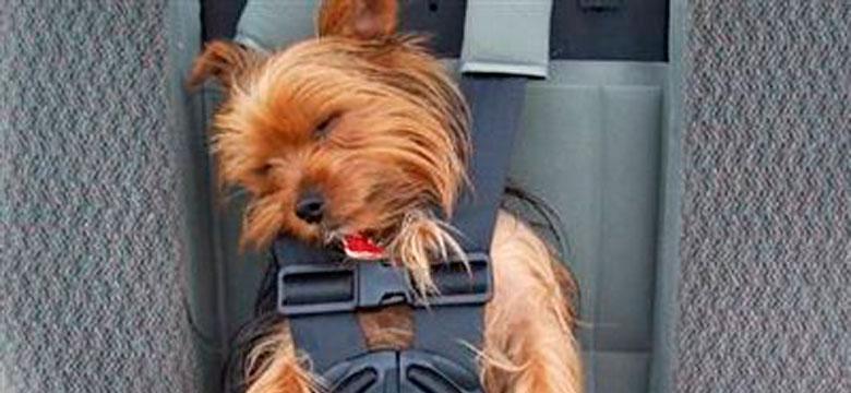 Traslados mascotas Alicante